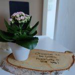 Wonen | DIY  | Plantje op berkenschijf