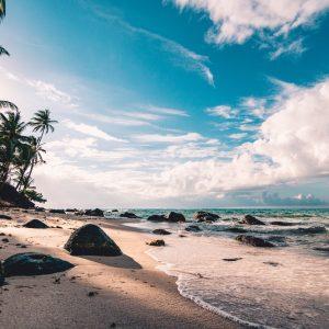 Strand met palm