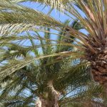 Travel | Een week op Gran Canaria | San Augustin
