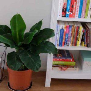 5 voordelen van planten in huis